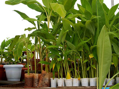 Plant genetics & crop breeding